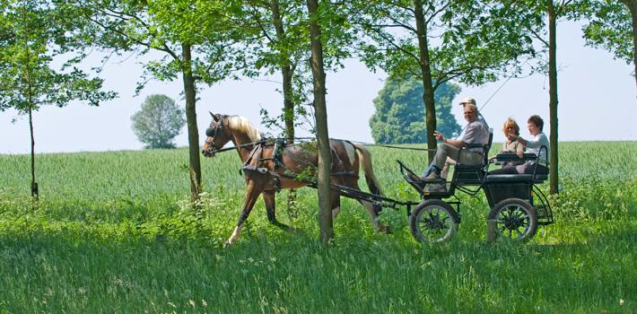 Met de paardenkoets op landgoed Twickel